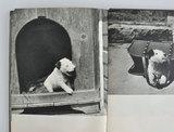 カレル・チャペックの写真絵本01.jpg